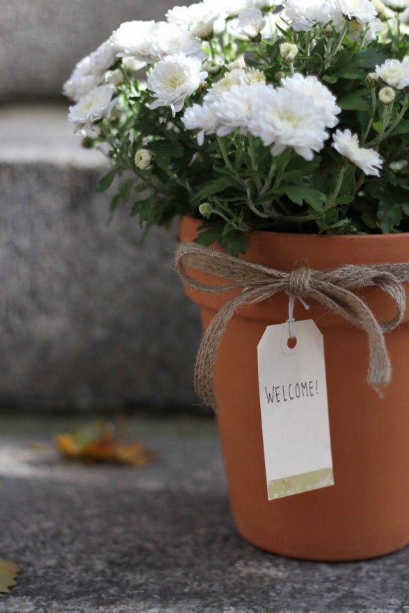 Usein isänpäiväkukka Suomessa on krysanteemi tai syklaami, Ruotsissa ruusu. Tavoista ja perinteistä viis, pääasia on että jos isä tykkää tietystä kukasta, hän sen myös saa.