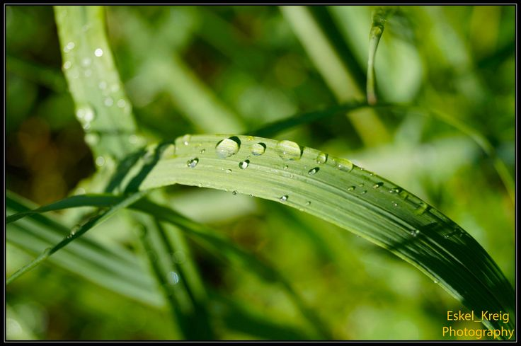 Wet grass (Free download and full size) by EskelKreig on DeviantArt