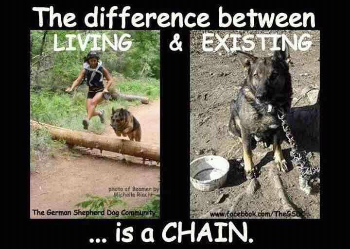 Resultado de imagen de no dog live with chain