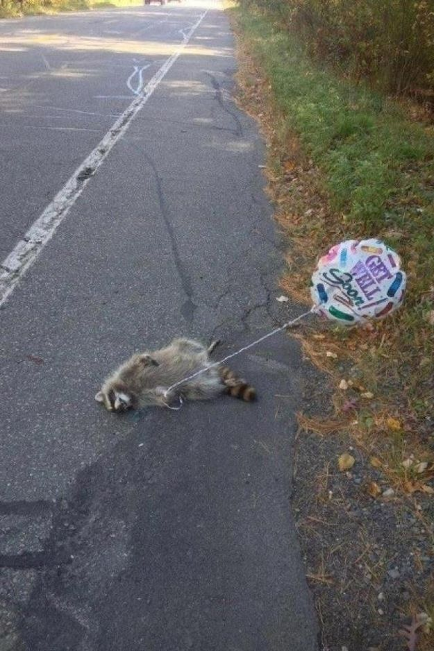 Get Well Soon Roadkill. this is hilarious
