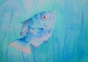 ansichtkaart 14 -vis- brechtje duijzer http://brechtjeduijzer.nl/