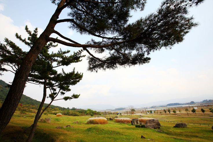 수 천년의 역사가 살아 숨쉬는 고창 고인돌 유적지