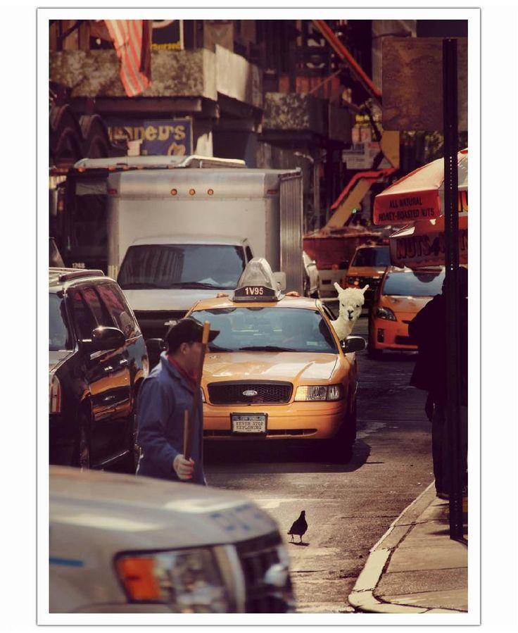 Never Stop Exploring NY VON Monika Strigel now on JUNIQE!