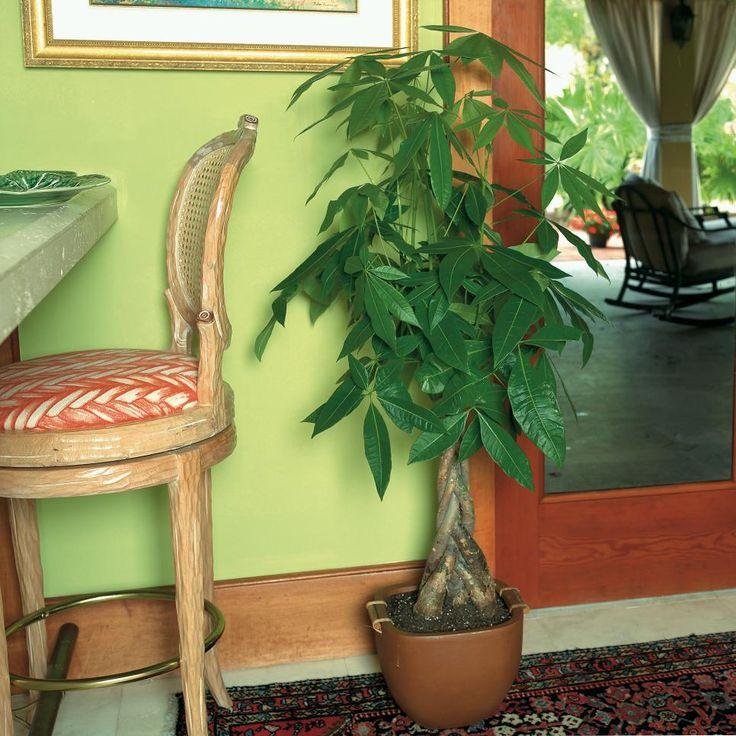 great indoor trees