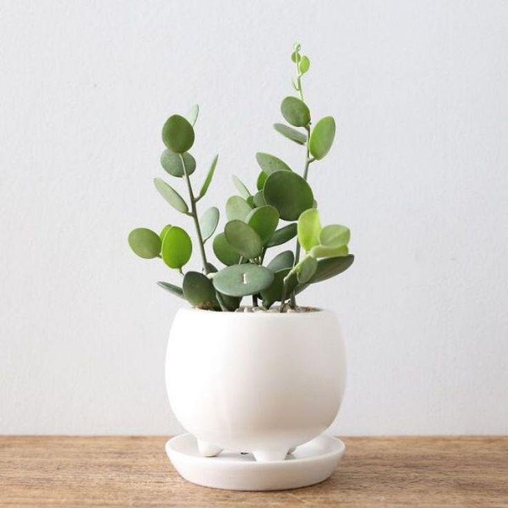 Nice 128 Indoor Plants Design Ideas https://architecturemagz.com/128-indoor-plants-design-ideas/