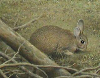 「森の領域(春)」続木唯道/油彩(P50号)/2002   第二回夢広場はるひ絵画ビエンナーレ奨励賞  -------  お馴染みのうさぎを森に遊ばせてみた。  自然讃歌を謳った「森の領域」と題する作品は、この(春)の他に(秋)がある。鬱蒼とした森は想像の中の架空の世界。  優しい風が吹いて木々が戦ぎ、注ぐ木漏れ日をキラキラと揺らしている。 動物達の棲家の「森」は自然の領域の一つだが、それぞれの領域に適応した生き物がいて、思いがけない所でふと彼らに遭遇することがある。  全神経と感情が研ぎ澄まされる瞬間だ!そんな遭遇の一瞬を絵にしてみたいと思う。そこで記憶の中にある幾つかの場面を融合させるわけだ。 「第2回夢広場はるひ絵画ビエンナーレ」で賞を頂いた時の審査員のコメント「いかにも嘘っぽいバーチャルな世界が魅力的」が、この作品への奨励の言葉としてその後の制作への弾みとなっている。