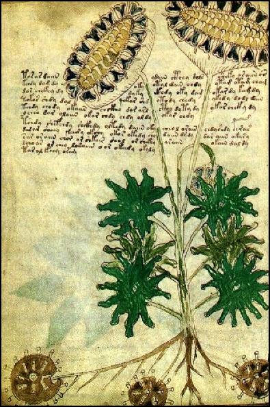 Voynich Manuscript, c. 15th century
