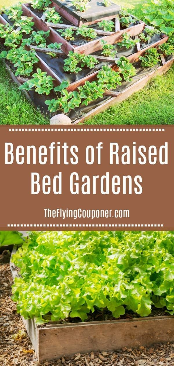 Benefits of Raised Beds. DIY garden and gardening  for beginners. Easy ideas for…
