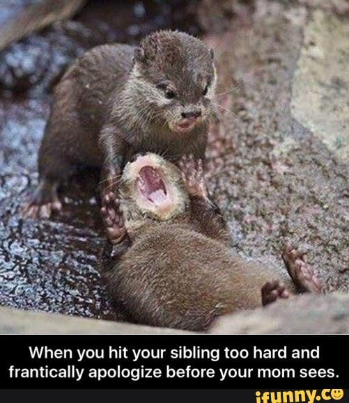 haha that s too fun siblings animal puns and funny quotes