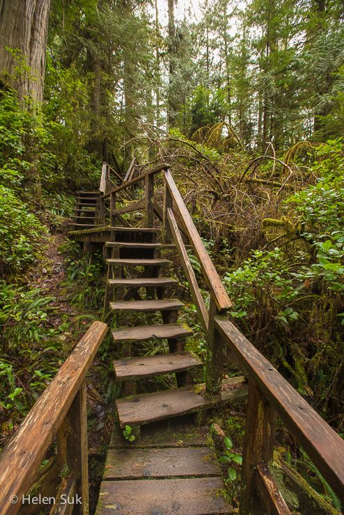 schooner cove :: tofino and ucluelet hiking trails