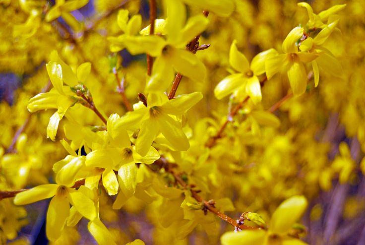 Spring yellow!
