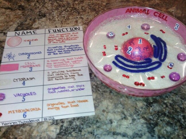 99 best cell project images on pinterest school projects