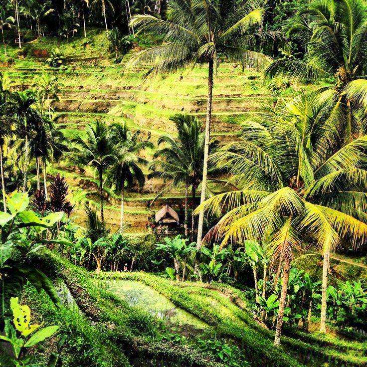 © RADO GADOCZI   117. Rizières Ubud, Bali   © Laura Augé