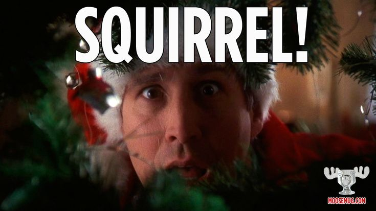 Squirrel! - Christmas Vacation quote, classic movie  Christmas Vacation Quot...