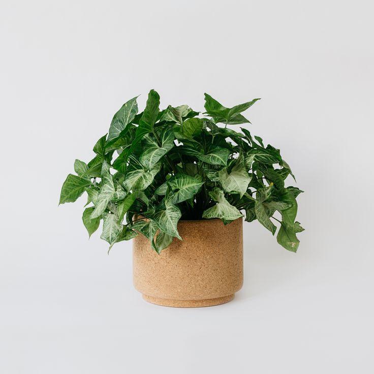 large indoor cork planter