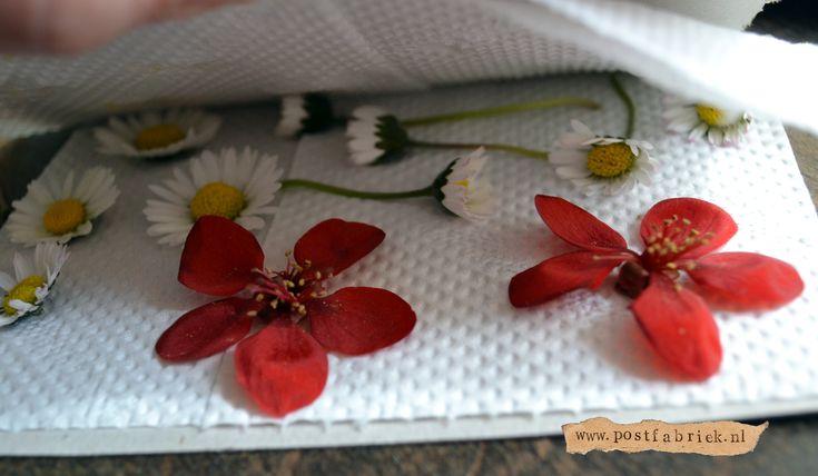Bloemen drogen voor bijv een boekenlegger