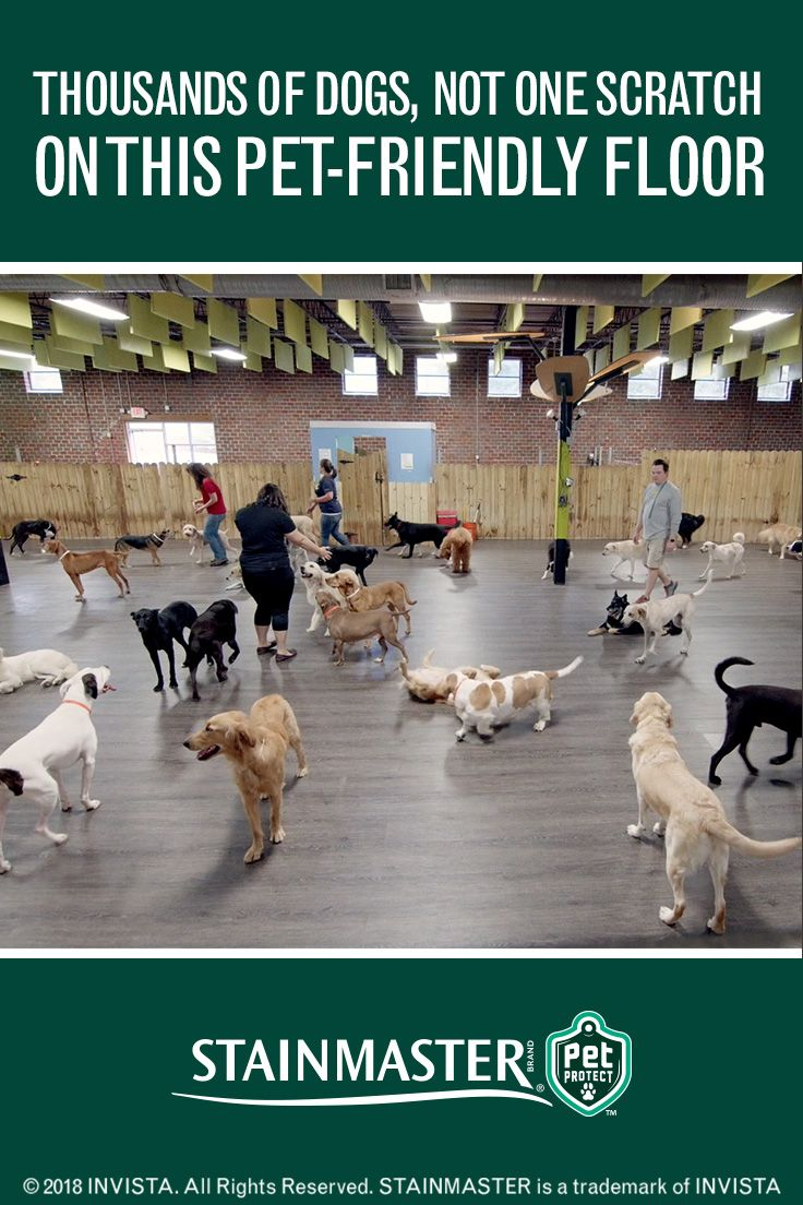 Ever wondered how a doggy daycare's floor can handle