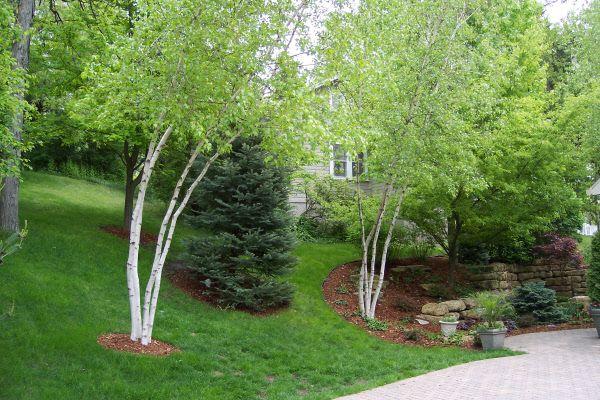 pin beautiful trees medicinal