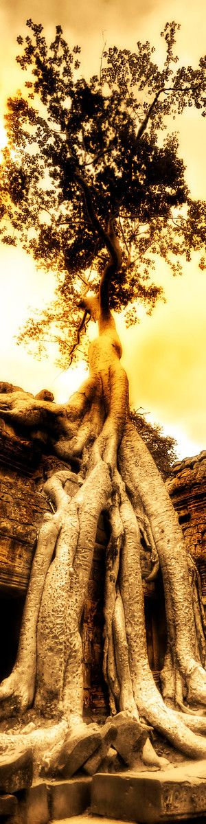 Swallowing the Ruins by Trey Ratcliff, via 500px. Tree roots, lovely organic