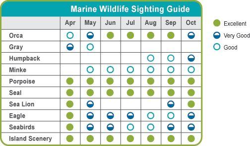 Marine Wildlife Sighting Guide
