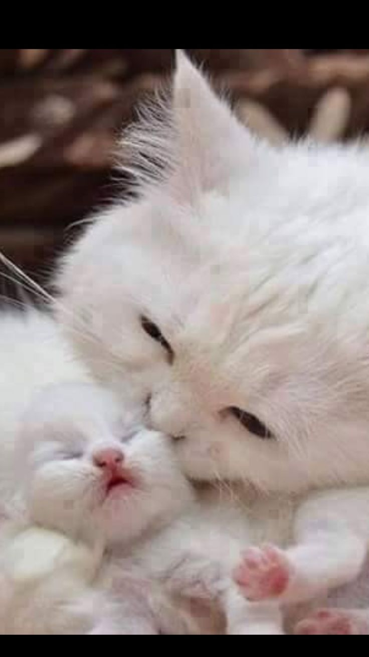 389 best mother cat and kittens images on pinterest kitty cats