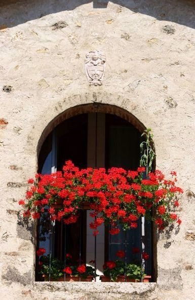 1000 Images About Windows With Flowers On Pinterest