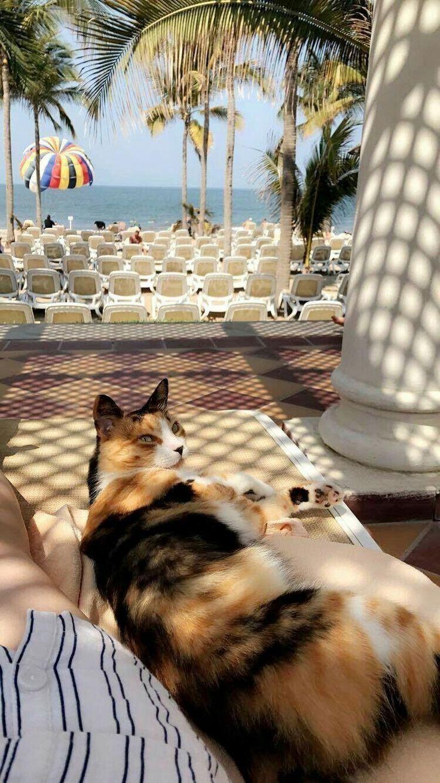 Lazy hotel cat sleeping in the shade near the sea