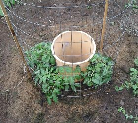 Grow tomatoes. Put a trashcan with holes in the middle and fill with water every couple of days. Genius!
