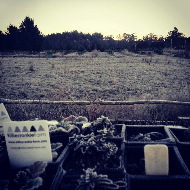 Frosty morning across the Nursery production area, pasture, & onto the Christmas Trees.