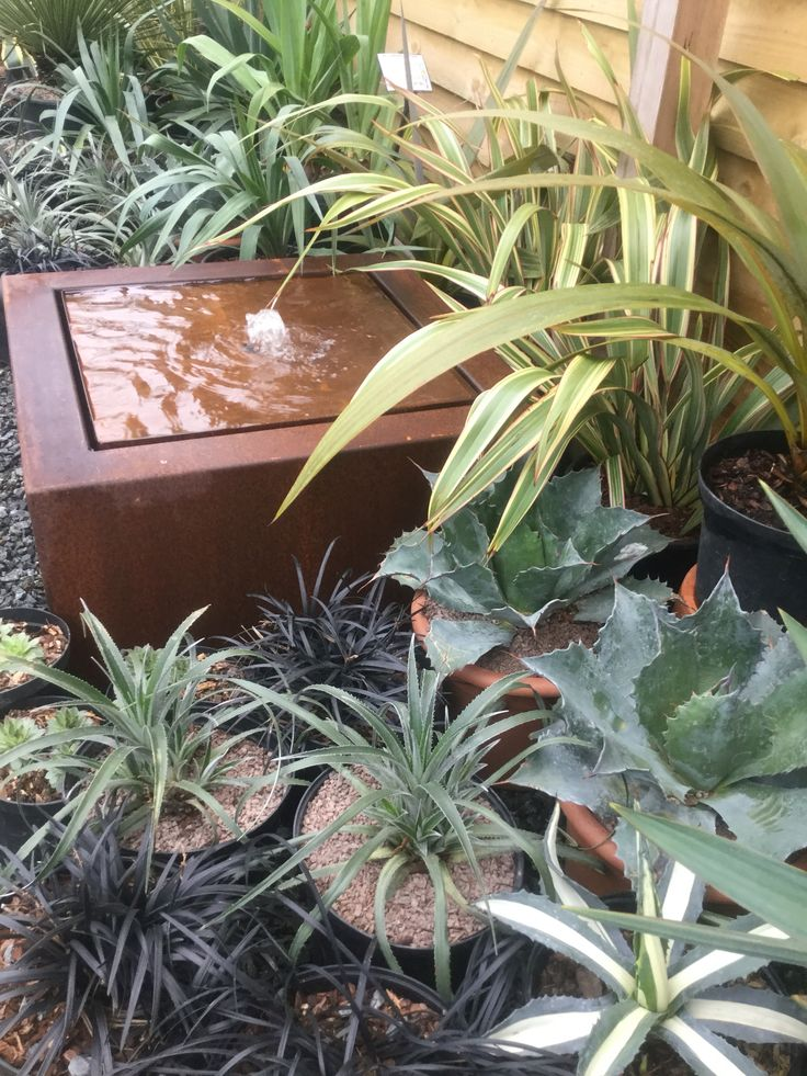 Corten Steel Water Table bubbling away amongst the plants at the nursery