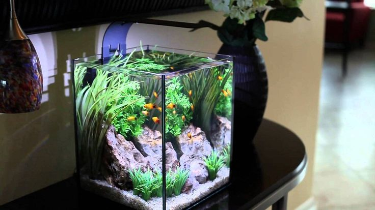 17 best ideas about cool fish on pinterest pretty fish - Awesome fish tank decorations ...