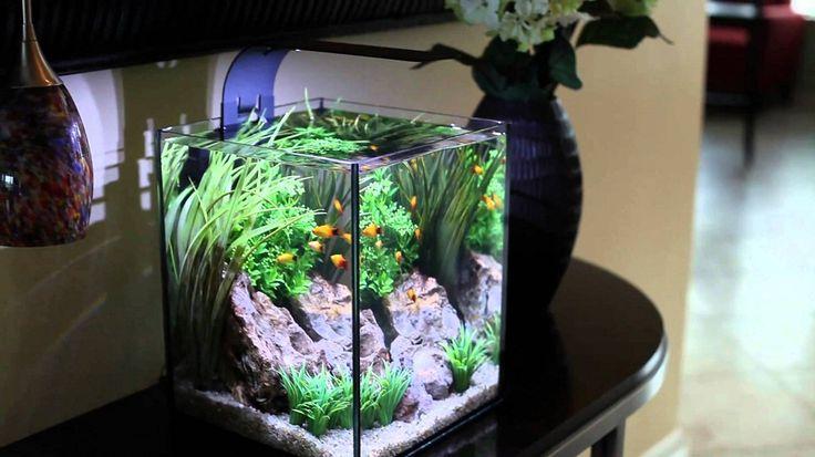 Cool Goldfish Tank Ideas The Image Kid