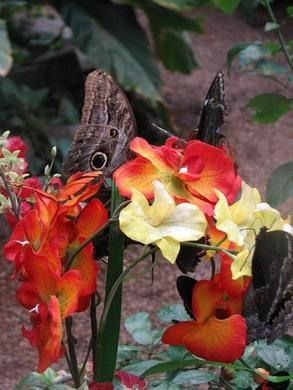 Schmetterlinghaus: The Imperial Butterfly Park | Atlas Obscura
