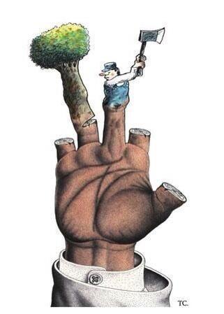 Aún podemos detener la destrucción de nuestro medio ambiente #MedioAmbiente #MundoVerde #ApoyoEcológico