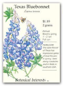 Texas Bluebonnet Seeds by Botanical Interests. $1.89. great annual for naturalized wildflower areas. Texas Bluebonnets are used for cut flowers and for planting in mass in wildflower areas. Seed comes in 2 gram pack. Lupinus texensis. has multiple 1/2 inch blue flowers on spokes and a white terminal tip with blooms that last for about 4 weeks in the spring. The Texas Bluebonnet, 'Lupinus texensis', is the state wildflower of Texas and it displays impressive spikes o...