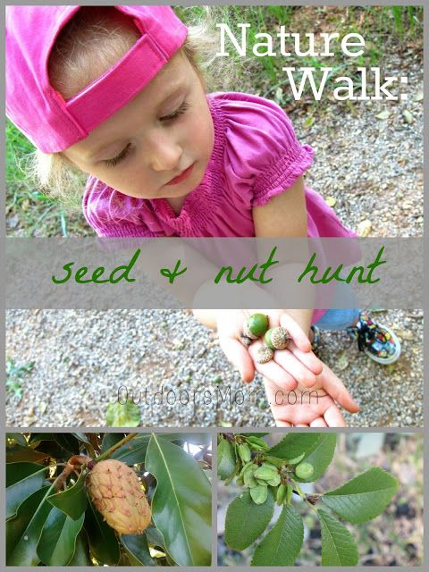 Here's an easy activity to get the whole family outdoors- Nature Walk: Seed and Nut Hunt + Craft