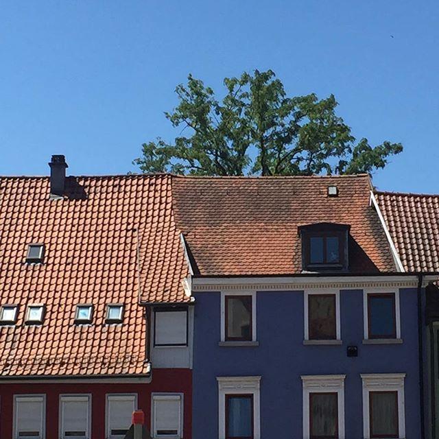 Another stunning day in Baden-Württemberg today…  . . . . #summer #EuropeanSu… – Isolde Dittrich