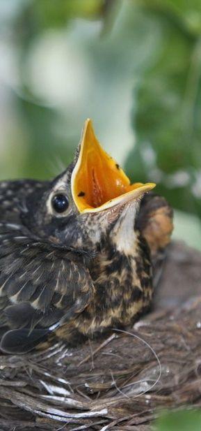 baby robin share moments