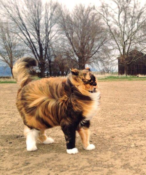 Top 5 Amazingly Fat Cats