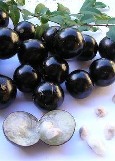 No jardim ou no vaso, aprenda a cultivar jabuticabeira em casa