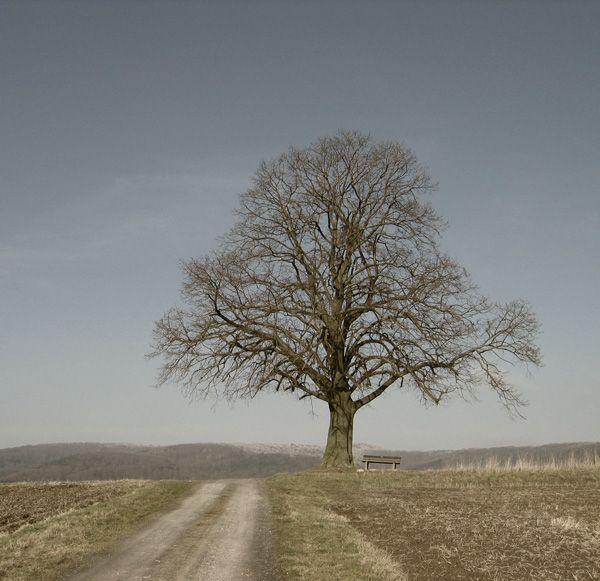 bäume bilder | ... Baum zum Ruhen. Der Blick über die Landschaft ist immer…