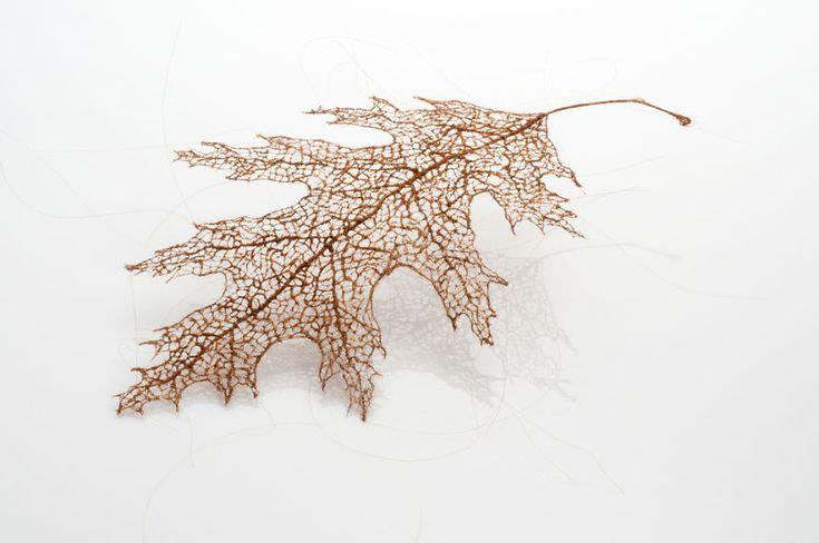 I Recreate Leaf Skeletons With Human Hair | Bored Panda
