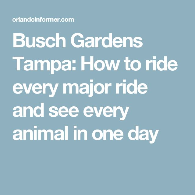 Busch Gardens Tampa: How to ride every major ride and see every animal in one day