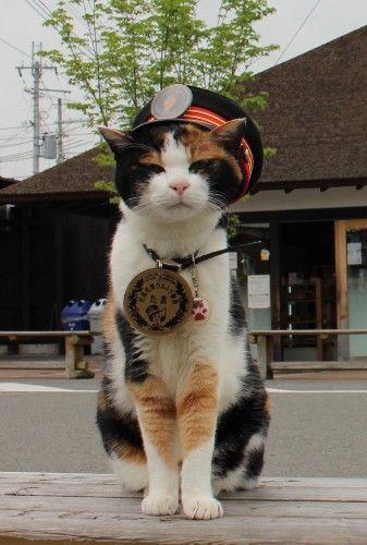 猫の形の駅舎! 猫の駅長! 和歌山県に猫だらけの駅がある | マイナビニュース