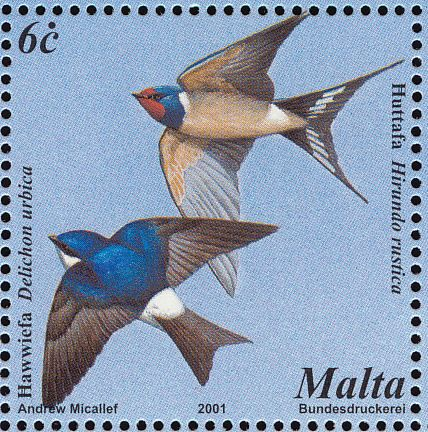 Common House Martin stamps - mainly images - gallery format