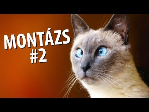▶ Videómánia Montázs #2 - YouTube