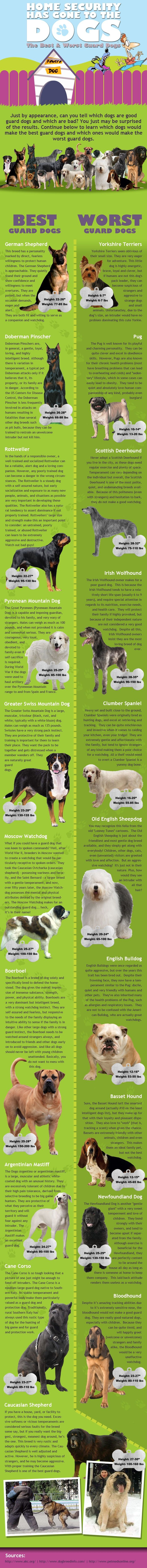 The Best and the Worst Guard Dogs [Infographic] | #Pets #Dogs #Infographic |