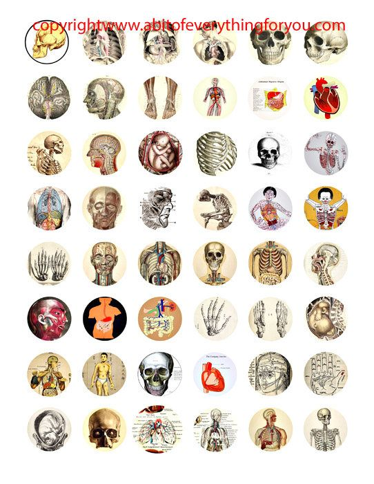 "human anatomy skulls skeletons body parts vintage clip art digital download collage sheet 1"" inch circles graphics images craft printables"