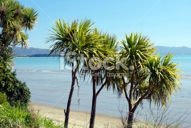 New Zealand Seascape with Cabbage Trees Royalty Free Stock Photo
