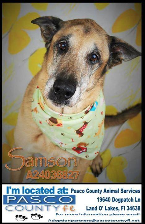 samson senior personals Samson - unser know-how für sie samson fertigt stellventile und stellklappen  nach din, ansi und jis in allen gängigen werkstoffen für sämtliche bereiche.